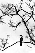 Original art for sale at UGallery.com | Ibis Silhouette by Andrew Stein | $100 | photography | http://www.ugallery.com/photography-ibis-silhouette-5426