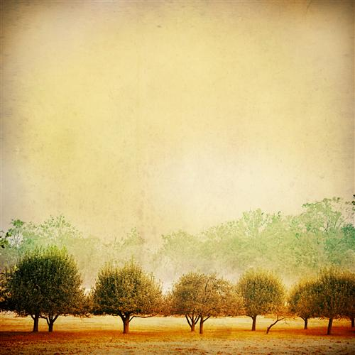 Original art for sale at UGallery.com | Where The Sweet Apples Grow by INA CHRISTENSEN | $135 |  | ' h x ' w | http://www.ugallery.com/photography-where-the-sweet-apples-grow