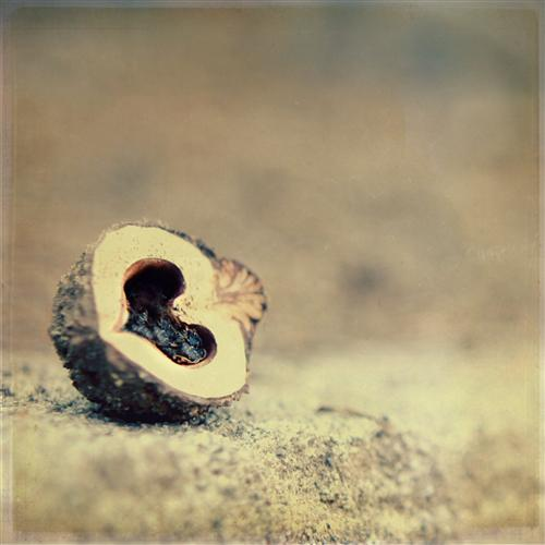 Original art for sale at UGallery.com | Nut Love by CHELSEA BEERY | $135 |  | ' h x ' w | http://www.ugallery.com/photography-nut-love