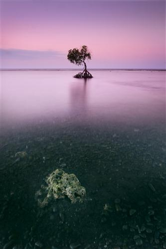 Original art for sale at UGallery.com | Pink Bali by ETIENNE ROUDAUT | $195 |  | ' h x ' w | http://www.ugallery.com/photography-pink-bali