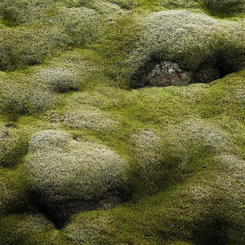 Original art for sale at UGallery.com | Iceland in Green by ETIENNE ROUDAUT | $160 |  | ' h x ' w | http://www.ugallery.com/photography-iceland-in-green