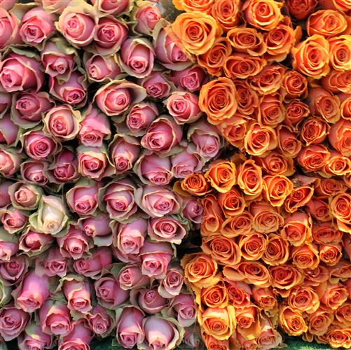 Original art for sale at UGallery.com | Roses for Sale on Rue de Grenelle by REBECCA PLOTNICK | $125 |  | ' h x ' w | http://www.ugallery.com/photography-roses-for-sale-on-rue-de-grenelle