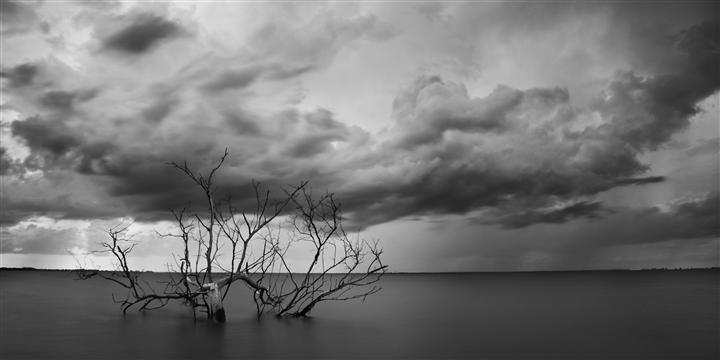 Original art for sale at UGallery.com | The Old Bay Tree by ANDREW VERNON | $295 |  | ' h x ' w | http://www.ugallery.com/photography-the-old-bay-tree