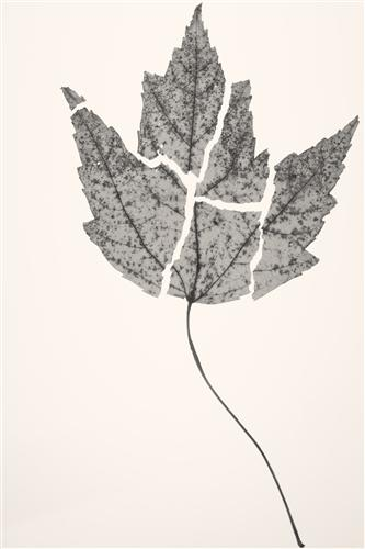 Original art for sale at UGallery.com | Flowers & Leaves V by KATHLEEN FINLAY | $145 |  | ' h x ' w | http://www.ugallery.com/photography-flowers-leaves-v