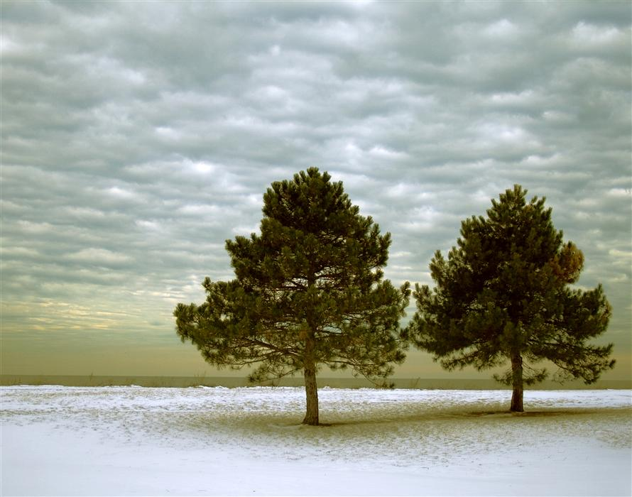 Original art for sale at UGallery.com | Two Trees by KEVIN PERLIC | $145 |  | ' h x ' w | http://www.ugallery.com/photography-two-trees
