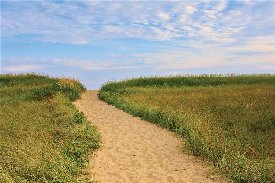 Discover Original Art by Katherine Gendreau | Martha's Vineyard Beach Path photography | Art for Sale Online at UGallery