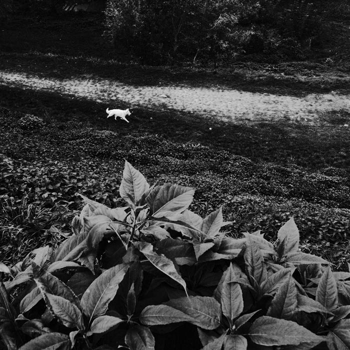 Original art for sale at UGallery.com | White Dog by ILLIA KRASNOSHCHOK | $185 |  | ' h x ' w | http://www.ugallery.com/photography-white-dog