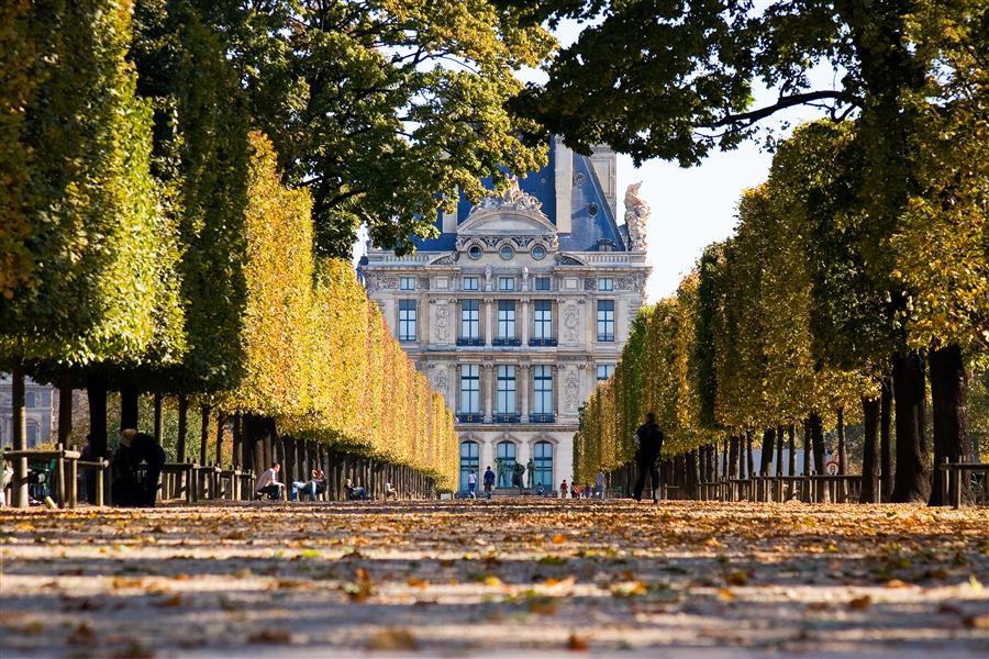 Discover Original Art by Mathew Lodge | Tuileries Gardens and Louvre in Fall, Paris photography | Art for Sale Online at UGallery