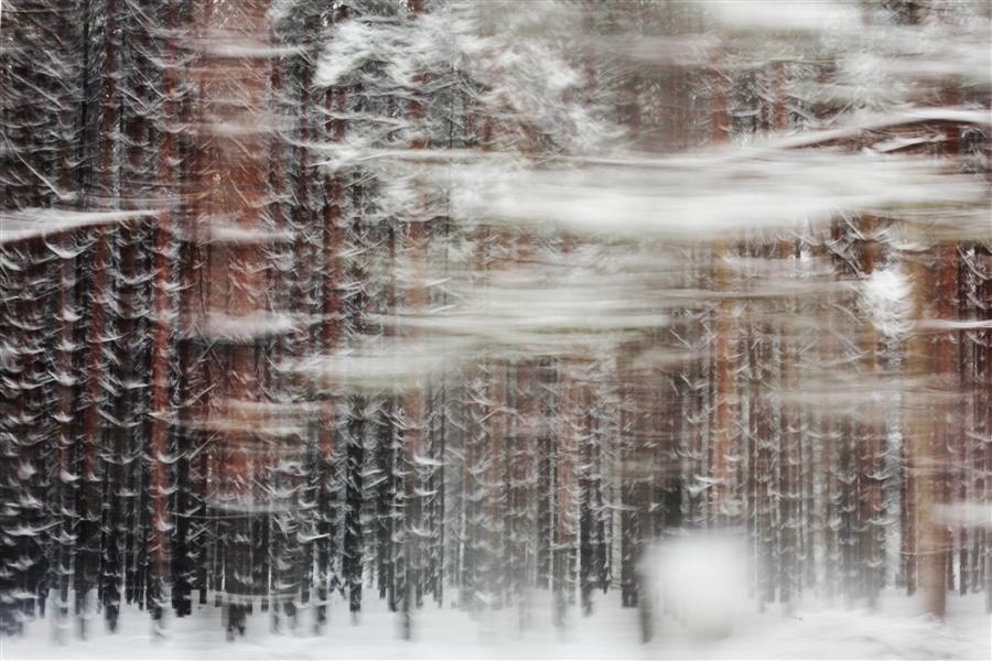 Original art for sale at UGallery.com | Pines by MARIA PLOTNIKOVA | $280 |  | ' h x ' w | http://www.ugallery.com/photography-pines