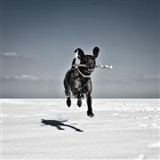 Animals art,Landscape art,Surrealism art,photography,Baum Method