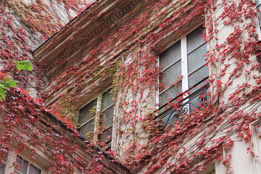 Original art for sale at UGallery.com | Autumn Ivy in the Marais by REBECCA PLOTNICK | $245 |  | ' h x ' w | http://www.ugallery.com/photography-autumn-ivy-in-the-marais