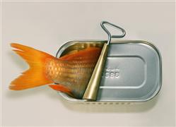 Animals art,Pop art,Surrealism art,digital printmaking,Fish Can't