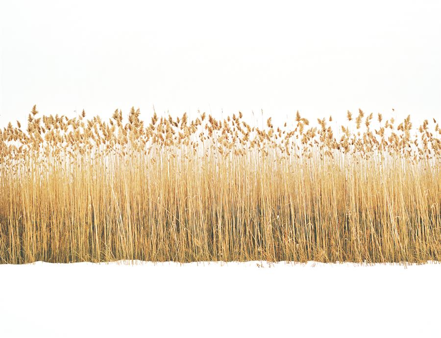 Original art for sale at UGallery.com | Reeds in Snow by MARK YAGGIE | $170 |  | ' h x ' w | http://www.ugallery.com/photography-reeds-in-snow