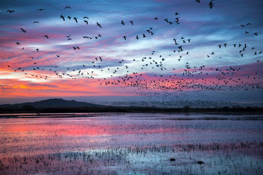 Original art for sale at UGallery.com | Pink Murmuration by MAXWELL KOEPKE | $170 |  | ' h x ' w | http://www.ugallery.com/photography-pink-murmuration
