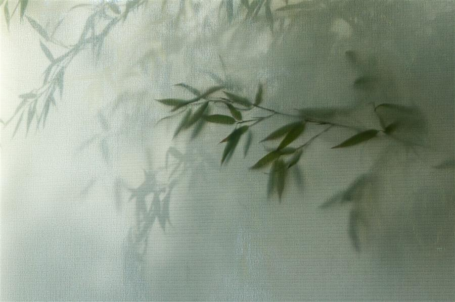 Original art for sale at UGallery.com | Bamboo by KIMBERLY POPPE | $145 |  | ' h x ' w | http://www.ugallery.com/photography-bamboo