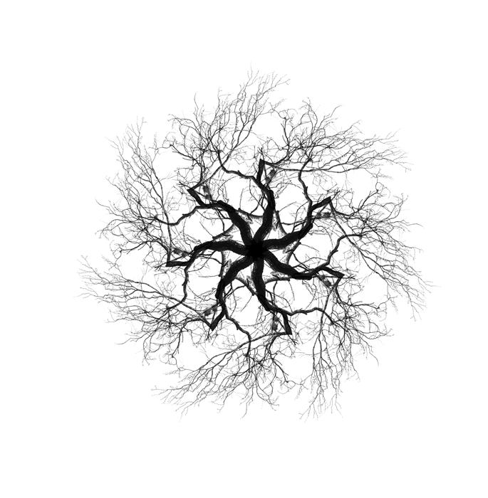 Original art for sale at UGallery.com | Trees in Winter, No. 3 by ANSEN SEALE | $185 |  | ' h x ' w | http://www.ugallery.com/photography-trees-in-winter-no-3