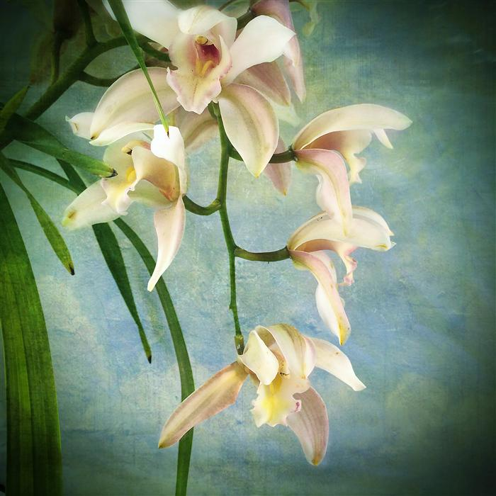 Original art for sale at UGallery.com | Orchids by GREG DYRO | $110 |  | ' h x ' w | http://www.ugallery.com/photography-orchids