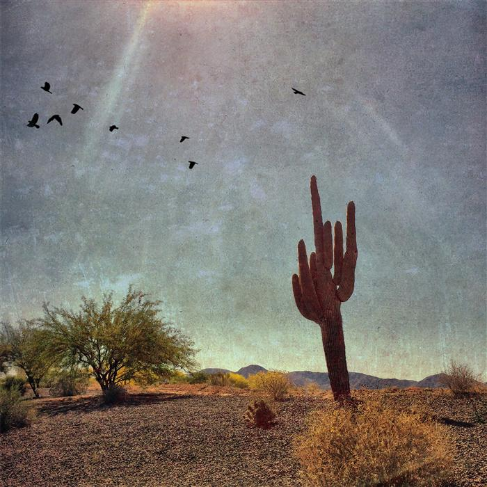 Discover Original Art by Greg Dyro | Saguaro Cactus Near the White Tank Mountains, Arizona photography | Art for Sale Online at UGallery