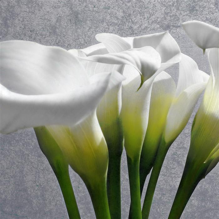 Original art for sale at UGallery.com | Calla Lily by GREG DYRO | $120 |  | ' h x ' w | http://www.ugallery.com/photography-calla-lily-31795