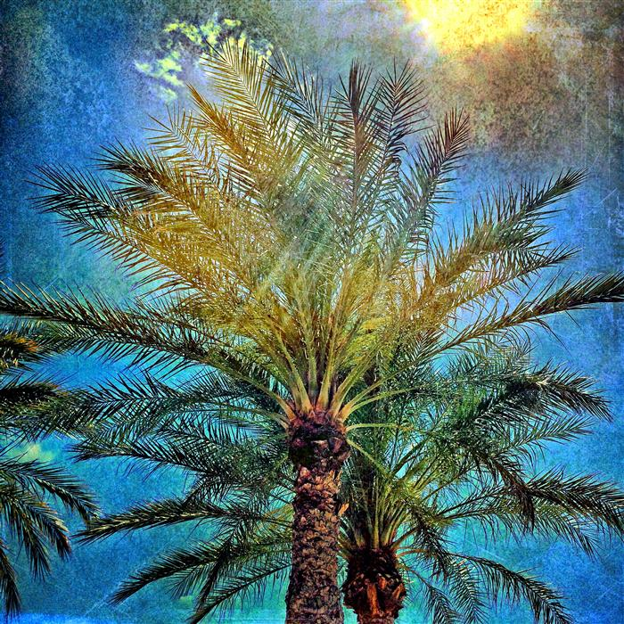 Original art for sale at UGallery.com | Palm Trees and the Sun by GREG DYRO | $120 |  | ' h x ' w | http://www.ugallery.com/photography-palm-trees-and-the-sun