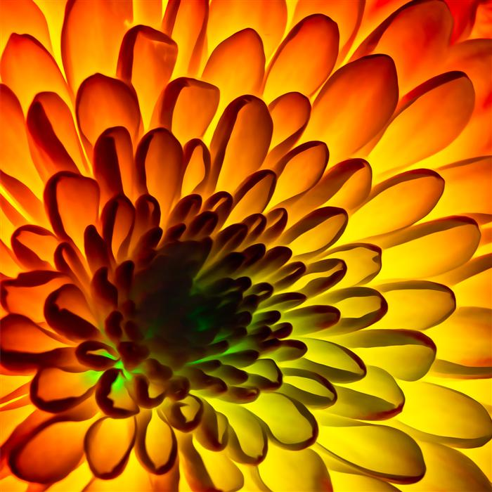 Original art for sale at UGallery.com | Flower 1 by KEVIN PERLIC | $135 |  | ' h x ' w | http://www.ugallery.com/photography-flower-1