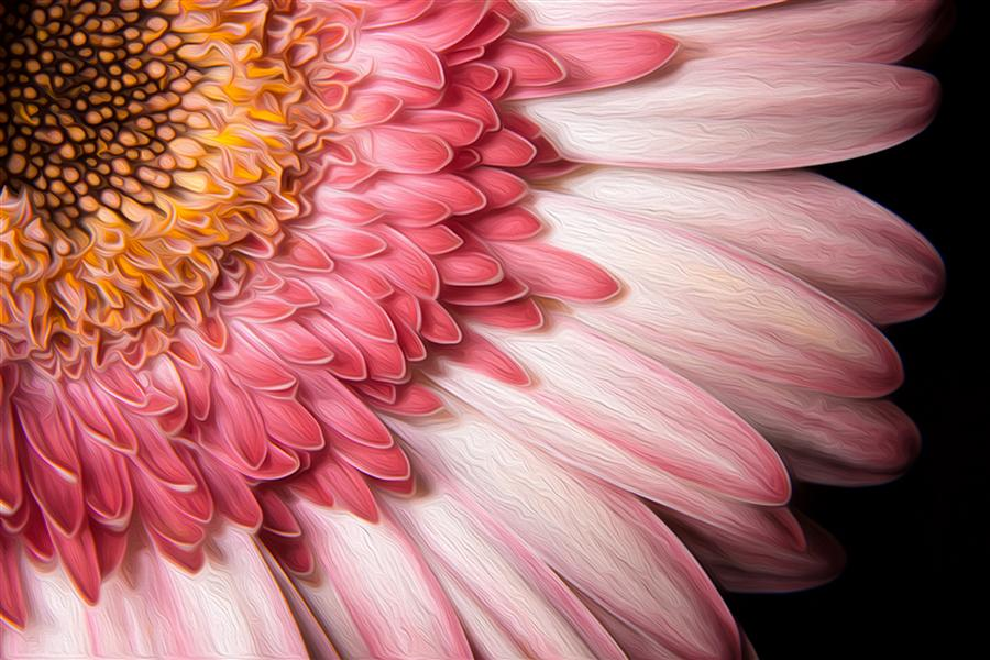 Discover Original Art by Kevin Perlic | Flower 3 photography | Art for Sale Online at UGallery