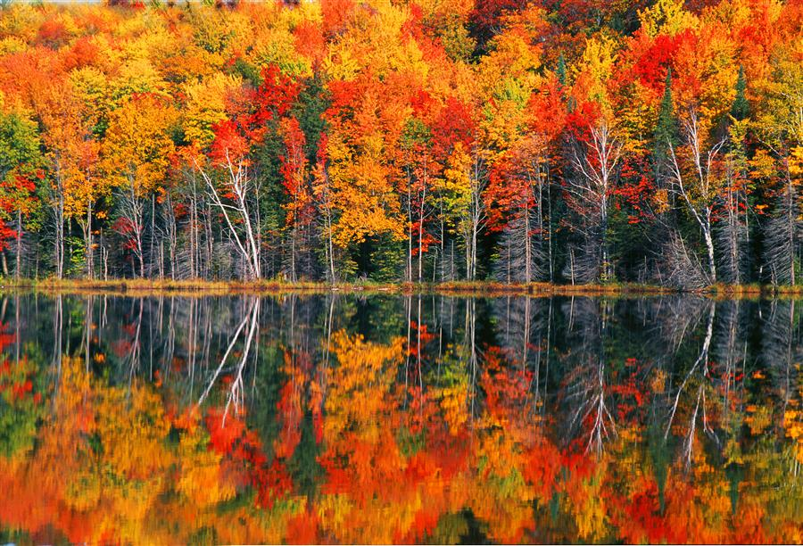 Original art for sale at UGallery.com | Redjack Lake Fall by ABHI GANJU | $195 |  | ' h x ' w | http://www.ugallery.com/photography-redjack-lake-fall