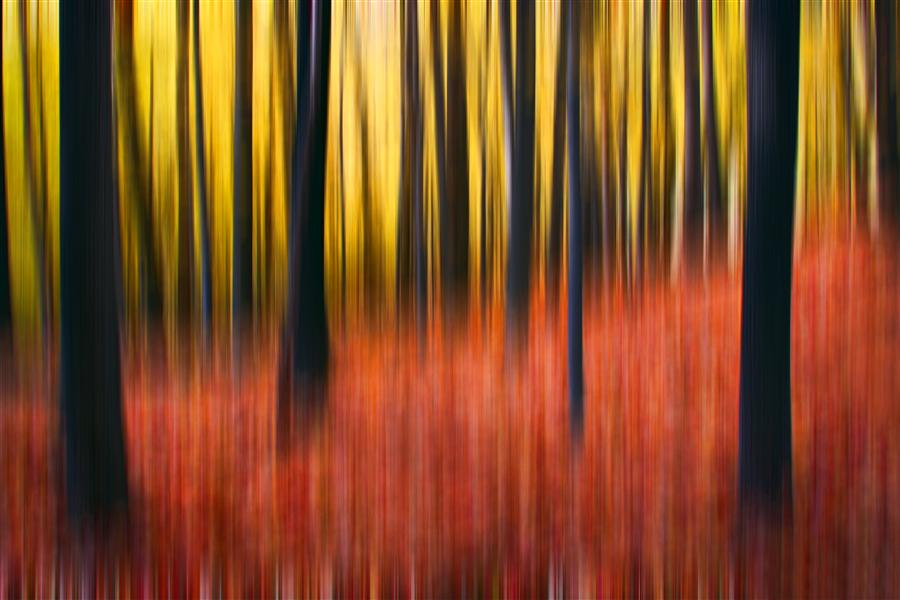 Original art for sale at UGallery.com | Forest Abstraction by MICHAEL BAKER | $170 |  | ' h x ' w | http://www.ugallery.com/photography-forest-abstraction