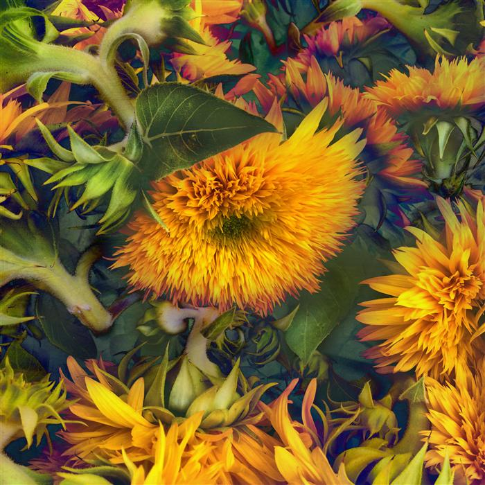Discover Original Art by Greg Dyro | Farmers Market Yellow photography | Art for Sale Online at UGallery