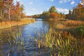 Landscape art,Nature art,Representational art,photography,Michigan Fall Scene