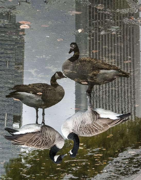 Discover Original Art by Jack Androvich | Geese photography | Art for Sale Online at UGallery