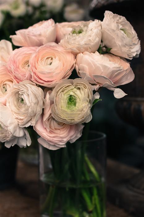 Original art for sale at UGallery.com | Pink Paris Ranunculus by REBECCA PLOTNICK | $220 |  | ' h x ' w | http://www.ugallery.com/photography-pink-paris-ranunculus