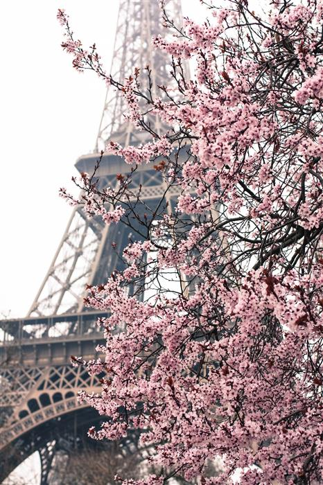 Discover Original Art by Rebecca Plotnick | Paris in the Springtime  photography | Art for Sale Online at UGallery