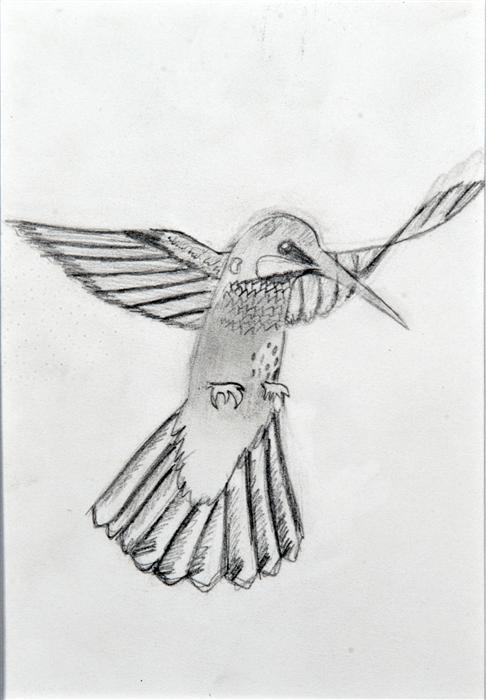Discover Original Art by Boys & Girls Clubs of San Francisco | Hummingbird pencil drawing | Art for Sale Online at UGallery