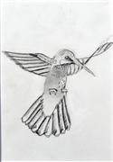 pencil drawing,Hummingbird