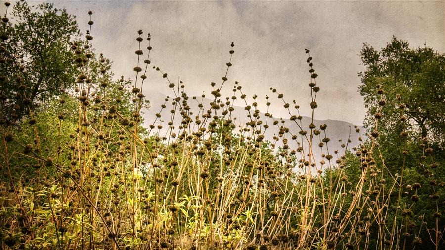 Discover Original Art by Greg Dyro | Wild Sage in the Foothills photography | Art for Sale Online at UGallery