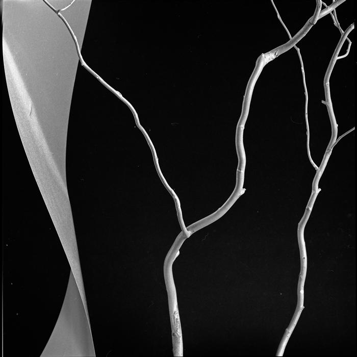Original art for sale at UGallery.com | Twisted Branch by JAN GORDON | $275 |  | ' h x ' w | http://www.ugallery.com/photography-twisted-branch