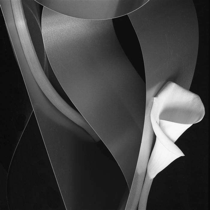 Original art for sale at UGallery.com | Calla and Steel Intertwined by JAN GORDON | $295 |  | ' h x ' w | http://www.ugallery.com/photography-calla-and-steel-intertwined