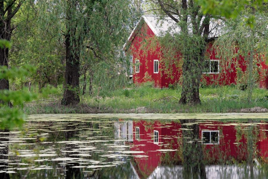 Original art for sale at UGallery.com | Reflecting on Red by LORIANNE ENDE | $145 |  | ' h x ' w | http://www.ugallery.com/photography-reflecting-on-red