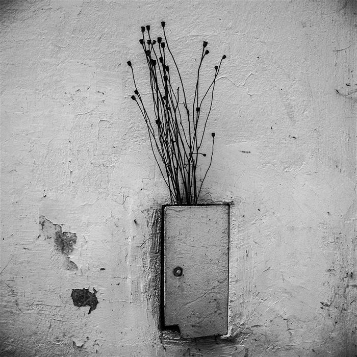 Discover Original Art by Alicja Brodowicz | Vase photography | Art for Sale Online at UGallery