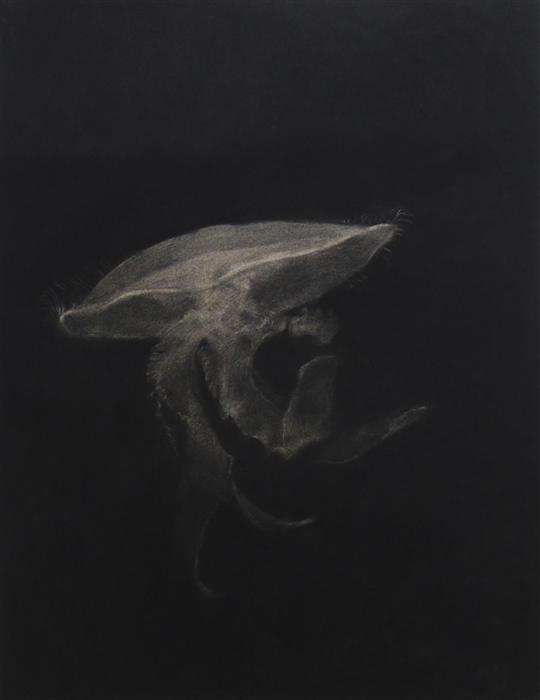 Discover Original Art by Drew McSherry | The Jellyfish charcoal drawing | Art for Sale Online at UGallery