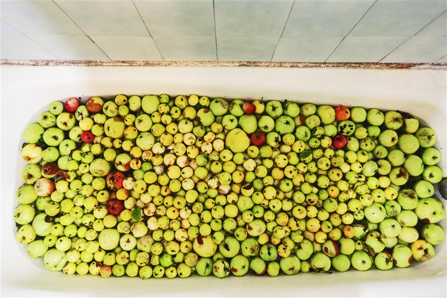 Original art for sale at UGallery.com | Apple Harvest by MARIA PLOTNIKOVA | $145 |  | ' h x ' w | http://www.ugallery.com/photography-apple-harvest