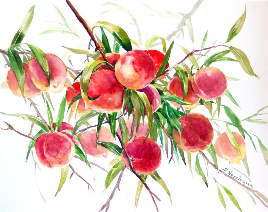Discover Original Art by Suren Nersisyan | Peaches (Fruits on the Tree) watercolor painting | Art for Sale Online at UGallery