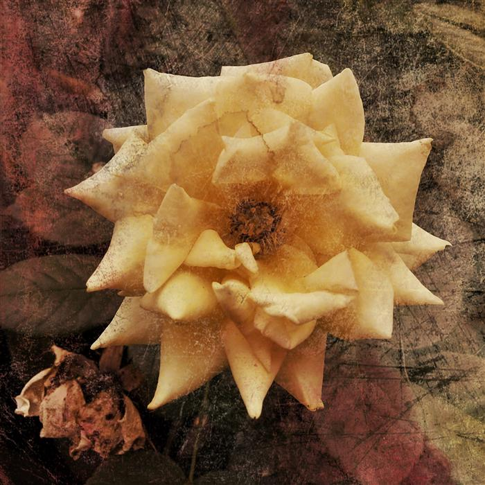 Original art for sale at UGallery.com | Yellow Rose by GREG DYRO | $185 |  | ' h x ' w | http://www.ugallery.com/photography-yellow-rose