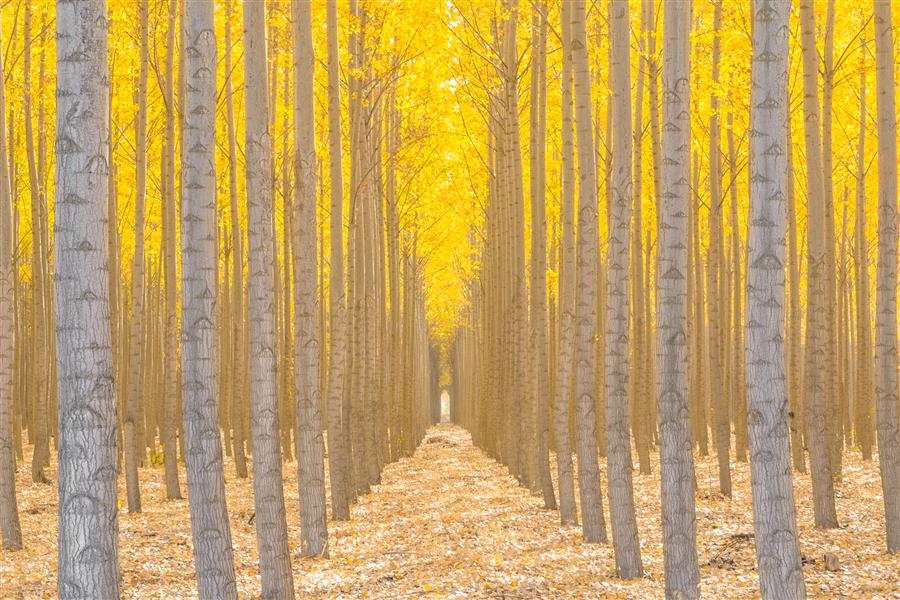 Original art for sale at UGallery.com | Silence Is Golden by ROSS LIPSON | $225 |  | ' h x ' w | http://www.ugallery.com/photography-silence-is-golden