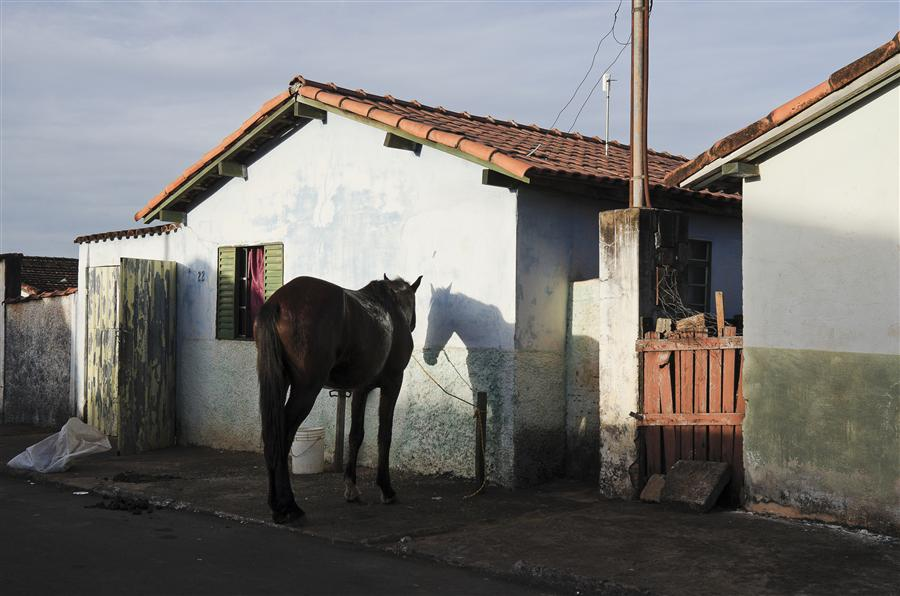Discover Original Art by Gustavo Minas | Horse and His Double photography | Art for Sale Online at UGallery