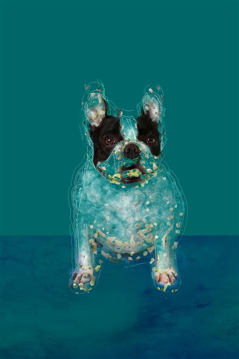 Original art for sale at UGallery.com | Bulldog in the Blue Room by SUSA DOSA | $200 |  | ' h x ' w | http://www.ugallery.com/photography-bulldog-in-the-blue-room