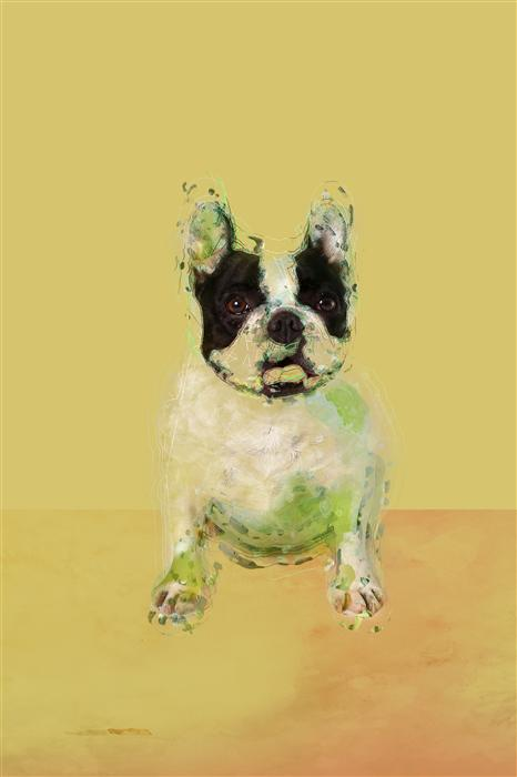 Discover Original Art by Susa Dosa | Bulldog in the Yellow Room photography | Art for Sale Online at UGallery