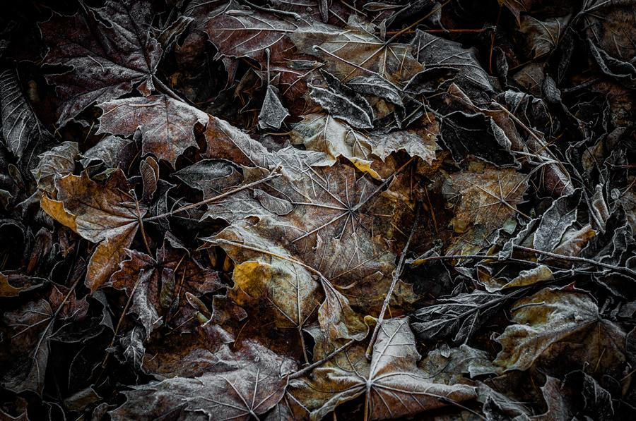 Original art for sale at UGallery.com | Autumn Leaves by ALICJA BRODOWICZ | $275 |  | ' h x ' w | http://www.ugallery.com/photography-autumn-leaves-42930