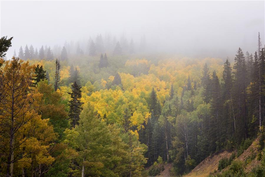 Original art for sale at UGallery.com | Santa Fe Aspens in Autumn 2 by BRIAN HARIG | $145 |  | ' h x ' w | http://www.ugallery.com/photography-santa-fe-aspens-in-autumn-2